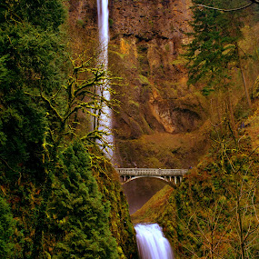 MULTNOMAH FALLS COLUMBIA RIVER GORGE by Gerry Slabaugh - Landscapes Waterscapes ( oregon, waterfalls, multnomah falls, moss, multnomah falls columbia river gorge, columbia river gorge )
