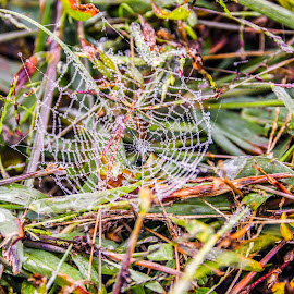 by Olivia Emery - Nature Up Close Webs