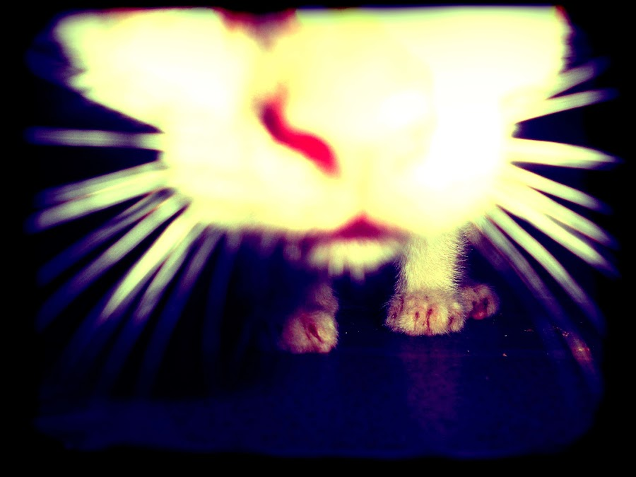 cat lomo by Franz Louie - Animals - Cats Kittens ( cat, lomo )