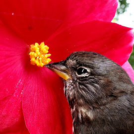 Stop and smell the flowers by Gene Richardson - Instagram & Mobile Android