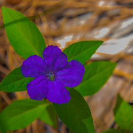 by Rob Whidden - Flowers Single Flower
