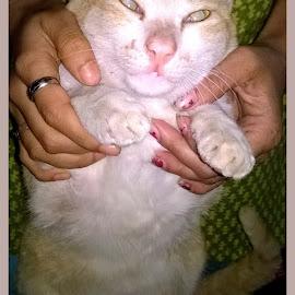 by Atreyi Samaddar - Animals - Cats Portraits (  )