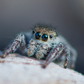 a jumper on the beach by Kevin Adams - Animals Insects & Spiders