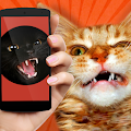 Game Cat Teaser: Sounds apk for kindle fire