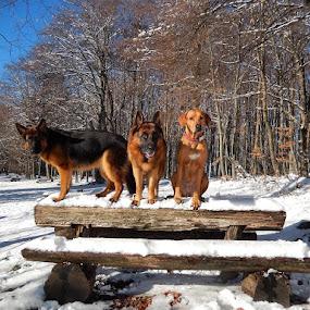by Ivana Tilosanec - Animals - Dogs Portraits ( pet portrait, pet photography, dogs, pet, pets, dog,  )
