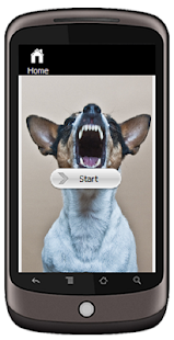 Rat Terrier - screenshot