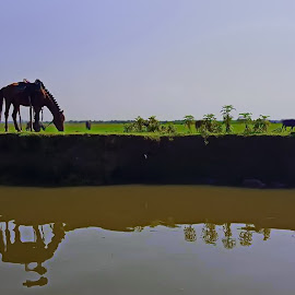Meadow by Fereshteh Molavi - Animals Horses ( water, grass, green, horse, reflections )