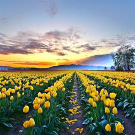 Morning light by Kris Schmidt - Flowers Flower Gardens