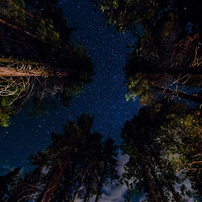 Lake Tahoe Starry Night by Wayne Louie - Landscapes Starscapes ( pwcstars, stars, trees, lake tahoe, starry )