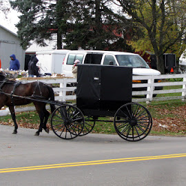 Amish Buggy Going to Market by Christine B. - Transportation Other ( amish, market, buggy, ohio, kidron )