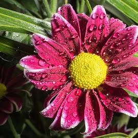 Flower  by Paul Putman - Flowers Single Flower ( macro, maybe daisey, green, yellow, flower, close )