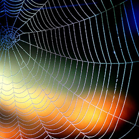Web at sunrise by JoAnn Palmer - Nature Up Close Webs ( webs, sun rise, web, spider, sun, spider web,  )