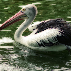 Burung 2 by Dimas N - Animals Birds