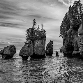 Hopewell Rocks by Rita Taylor - Black & White Landscapes ( water, sunset, trees, sea, rocks,  )