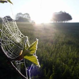 by Marta Kolczyńska - Nature Up Close Webs