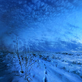 Well Before the Dawn by Phil Koch - Landscapes Prairies, Meadows & Fields ( vertical, travel, yellow, love, sky, nature, snow, weather, perspective, light, orange, trending, colors, art, twilight, white, mood, journey, horizon, rural, portrait, country, environment, winter, dawn, season, serene, popular, outdoors, lines, natural, hope, inspirational, canon, wisconsin, ray, joy, landscape, sun, photography, life, emotions, dramatic, horizons, inspired, clouds, office, park, heaven, camera, beautiful, scenic, living, morning, shadows, field, footprints, unity, blue, sunset, amber, peace, meadow, beam, earth, sunrise )