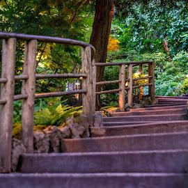 Steps by Darren Sutherland - City,  Street & Park  City Parks
