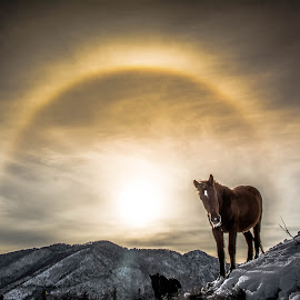 Sun Halo by Nik Nikolov - Landscapes Sunsets & Sunrises ( halo, sun )