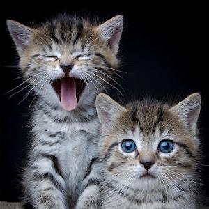 IMG_0353 nellie kittens-s no data.jpg