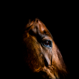 Fine art portrait of horse by Mark Helm - Animals Horses ( face, equine, art, horse, fine,  )