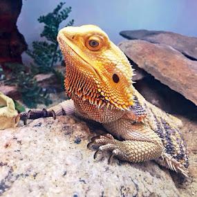 by Heidi George - Animals Reptiles (  )