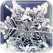 Winter Live Wallpaper HD Free