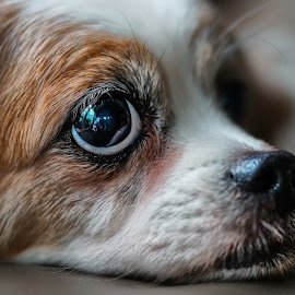 My Mac  by Tran Ngoc Phuc Ngoctiendesign - Animals - Dogs Portraits