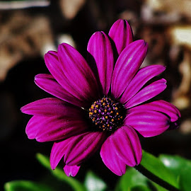 Purple Flower by Sarah Harding - Novices Only Flowers & Plants ( plant, nature, novices only, garden, flower )
