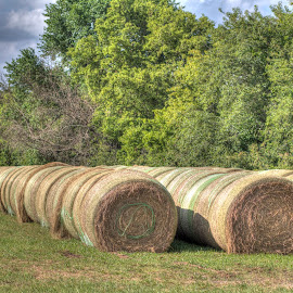 Hay bales all in a row... by Jackie Eatinger - Nature Up Close Other Natural Objects (  )