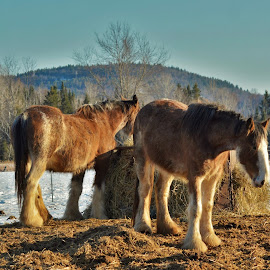 Awsomness by Mario Monast - Animals Horses ( animals, nature, horses, colorful, colors, landscapes )