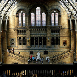 National History Museum,London by Alka Smile - Buildings & Architecture Public & Historical