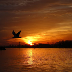 Sunset in Belgrade by Natasa Ilic - Landscapes Sunsets & Sunrises ( #autumn, #belgrade, #blok70, #seagull, #sunset, #river, #serbia, #riversava )