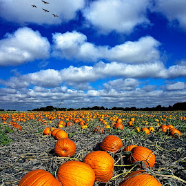 Field of Uncarved Visions by Phil Koch - Nature Up Close Gardens & Produce ( natural light, wisconsin, summer. spring, vertical, photograph, environement, farmland, yellow, leaves, phil koch, spring, photography, sun, love, farm, nature, autumn, horizons, inspired, clouds, office, orange, green, twilight, agriculture, horizon, myhorizonart, scenic, morning, portrait, field, winter, red, national geographic, seasons, blue, sunset, serene, fall, peace, meadow, earth, sunrise, landscapes, floral, inspirational, pumpkins, halloween, Thanksgiving Challenge, orange. color )