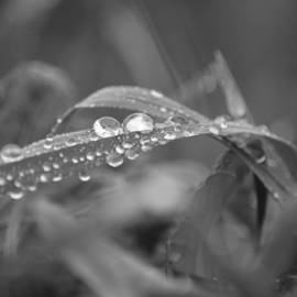Morning dew by Diana Orey - Nature Up Close Leaves & Grasses ( nature, grass, green, closeup )