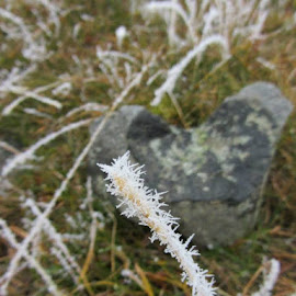 Rimfrost by Annette Ovesen - Nature Up Close Leaves & Grasses