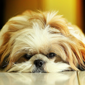 LONELY by Andy Teoh - Animals - Dogs Portraits (  )