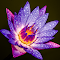 DSC_4880-2.jpg