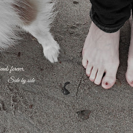 Friends forever, side by side by Fiona Etkin - Typography Captioned Photos ( pet, friendship, fur, feet, beach, paws, dog )