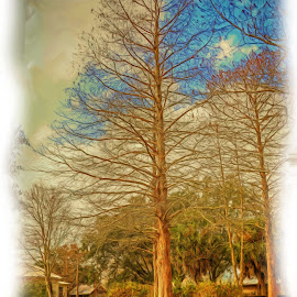 CYPRESS TREE by Ron Olivier - Digital Art Places