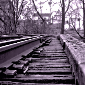 Railroad tracks by Jim Davis - Transportation Trains ( railroad tracks, railroad, abandoned and forgotten, tracks )
