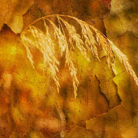 Abstract seed capture by Glenda Clausen - Digital Art Things ( nature, textures, green, seeds, brown, gold )