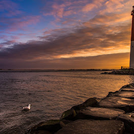 A Seagull Sunrise by Dave Kaplan - Landscapes Sunsets & Sunrises ( shore, clouds, water, reflection, seagull, sunset, waves, lighthouse, ocean, sunrise, beach, jetty, rocks, rain )