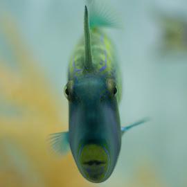 fish by Zac Rushbrook - Animals Fish ( underwater, fish, focus, eye, eyes )