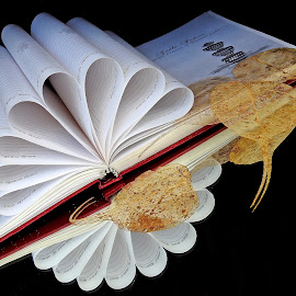 Diary by Asif Bora - Artistic Objects Education Objects
