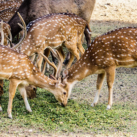 by Mohsin Raza - Animals Other