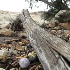 Under the juniper tree by Joshua Pettit - Nature Up Close Rock & Stone ( #juniper #tree #utah #life #change #beauty #survive )