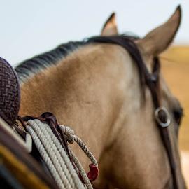 by Erin Schwartzkopf - Animals Horses ( ranch, cowboy, detail, ranching, horses, wyoming, horse, western,  )