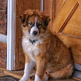 A Puppy on My Doorstep by Twin Wranglers Baker - Animals - Dogs Puppies