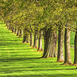in the row by Tomasz Marciniak - City,  Street & Park  City Parks ( park, grass, green, trees,  )