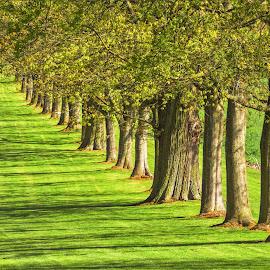 in the row by Tomasz Marciniak - City,  Street & Park  City Parks ( park, grass, green, trees,  )
